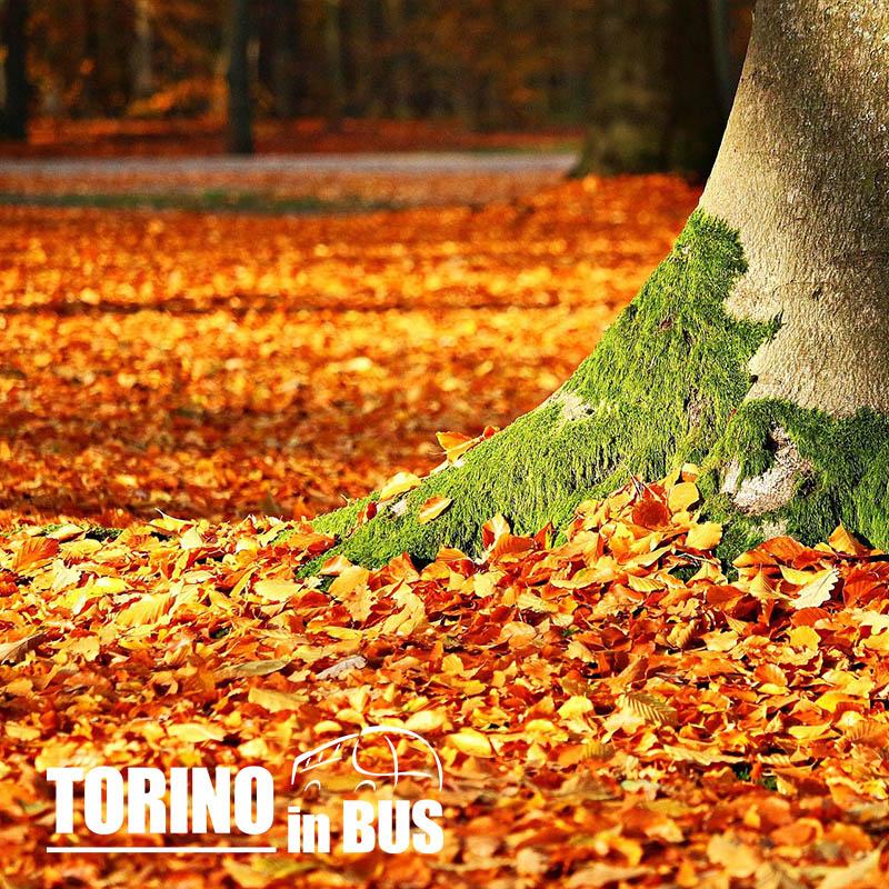 Foliage nell'Oasi Zegna - Torino in Bus
